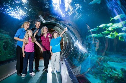 1 Day Admission to 3 Attractions - Madame Tussauds, SEA LIFE and The Orlando Eye