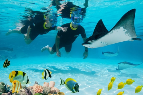 Discovery Cove Ultimate Package with swim PLUS unlimited FREE parking