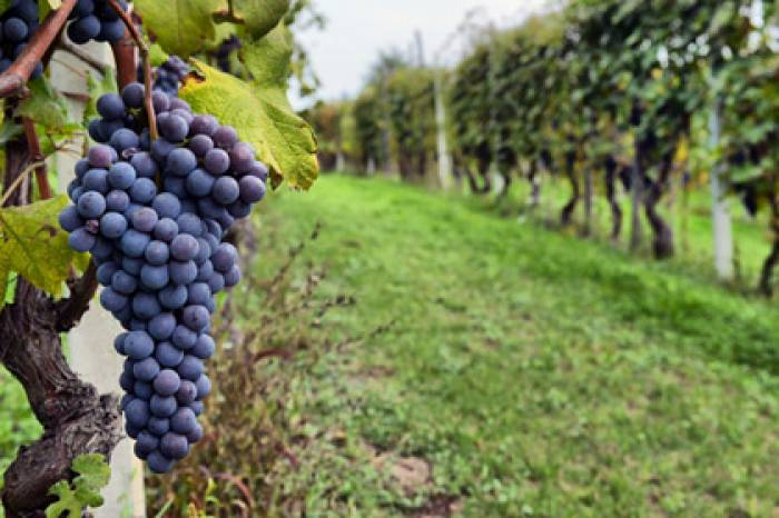 Full Day Wine Country Tour (Napa Valley and Sonoma Valley)