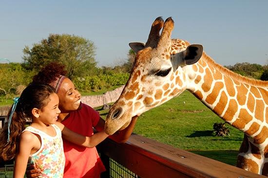 Serengeti Safari® at Busch Gardens
