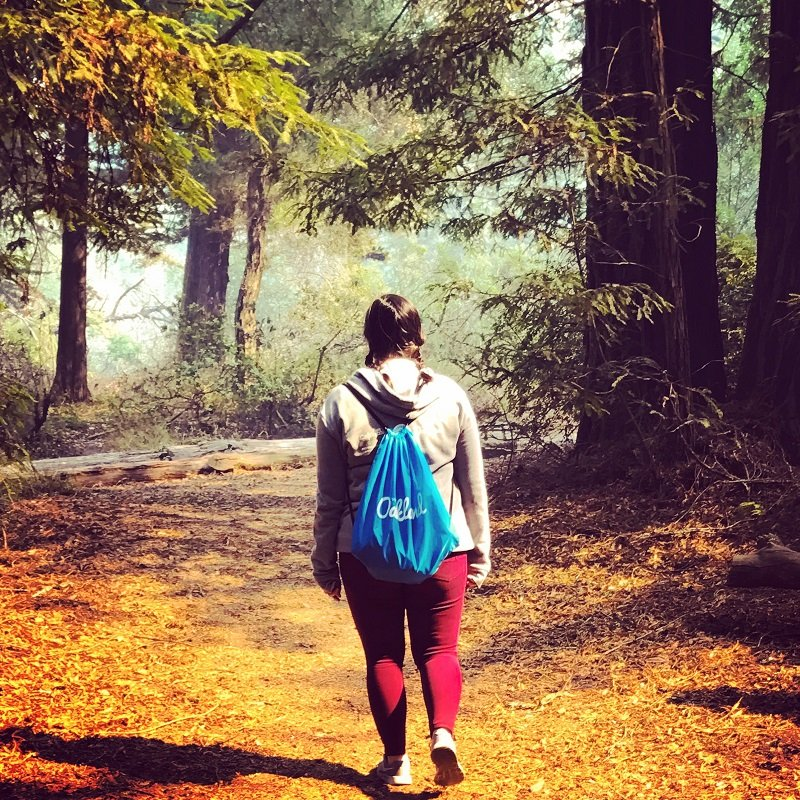 redwoods-tour-california