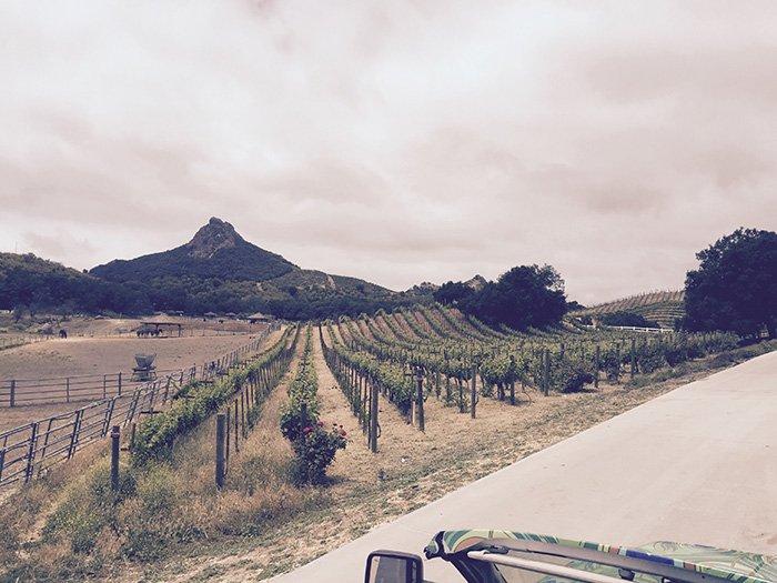 malibu-vineyard