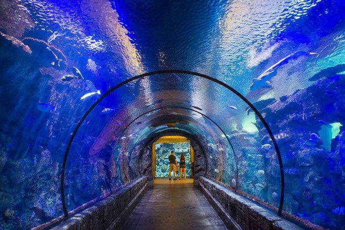 shark-reef-aquarium-las-vegas