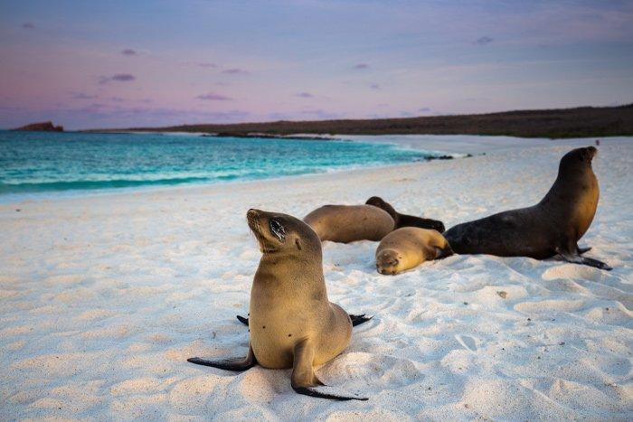 galapagos-islands-cruise