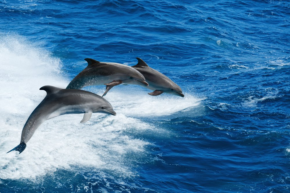 dolphin-racer-st-pete-clearwater