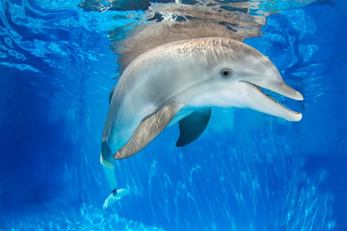 winter-clearwater-marine-aquarium
