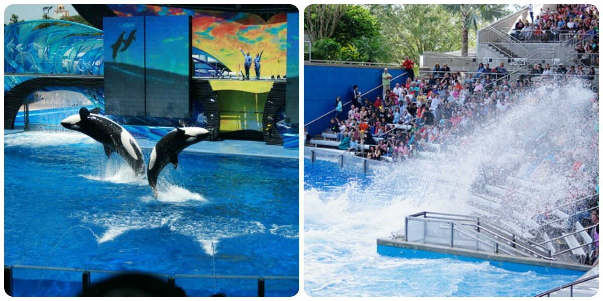 Tips for planning your trip to SeaWorld Orlando